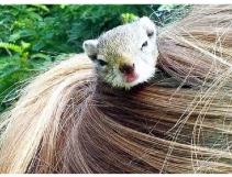 Abandoned_Squirrel_Lives_in_Girl's_Ponytail_-_ABC_News
